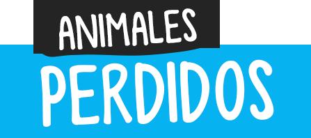 MSM Animales Perdidos | Encontrá a tu mascota