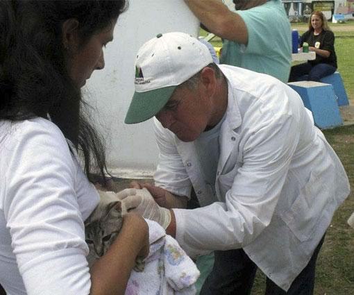Continua el plan de castracion y vacuncacion de Zoonosis