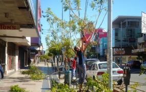 Poda de formación y mantenimiento de  árboles  en la Av. Perón